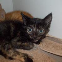 Adopt A Pet :: Fire - Palm Coast, FL
