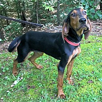 Adopt A Pet :: Myles to Go - Atlanta, GA
