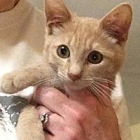 Adopt A Pet :: Ike - Eureka, CA