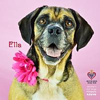 Adopt A Pet :: Ella - Tomball, TX