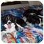 Photo 4 - Border Collie Dog for adoption in San Pedro, California - MARIE
