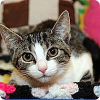 Adopt A Pet :: Liberty - Farmingdale, NY