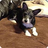 Adopt A Pet :: Rascal - Hazard, KY