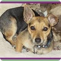 Adopt A Pet :: Prince Jack (In New England) - Brattleboro, VT