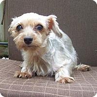 Adopt A Pet :: Bonnie - CAPE CORAL, FL