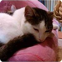 Adopt A Pet :: Josephine - Erie, PA