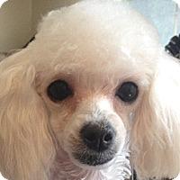 Adopt A Pet :: Nicole - Dover, MA