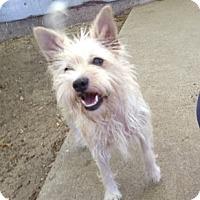 Adopt A Pet :: Peaches - Lockhart, TX