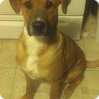 Adopt A Pet :: Clyde Barrow - Hamburg, PA