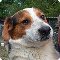 Adopt A Pet :: *Simon - PENDING - Westport, CT
