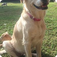Adopt A Pet :: Cassidy - Smyrna, GA