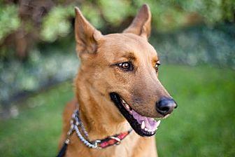Shepherd (Unknown Type)/Labrador Retriever Mix Dog for adoption in Marina del Rey, California - Don Don