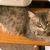 Adopt A Pet :: Goldie - McHenry, IL
