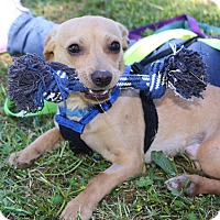 Adopt A Pet :: Chance - Winters, CA