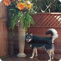 Adopt A Pet :: Vonn! - Sacramento, CA