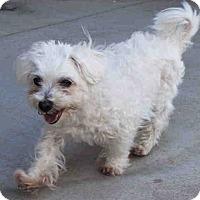 Adopt A Pet :: Ziggy - Santa Barbara, CA