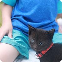 Adopt A Pet :: Dreamer - Chandler, AZ