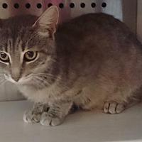 Adopt A Pet :: Lizzie - Washburn, MO