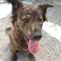 Adopt A Pet :: Mimi - Missoula, MT