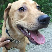 Adopt A Pet :: Jonathan - Toronto, ON
