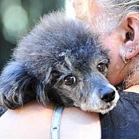 Adopt A Pet :: Winston - Vernonia, OR