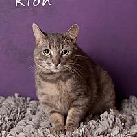 Adopt A Pet :: Kion - Scottsdale, AZ