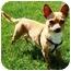 Photo 2 - Chihuahua Dog for adoption in Osseo, Minnesota - ChiChi