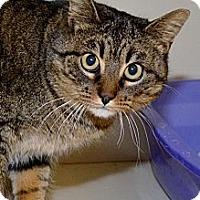 Adopt A Pet :: Ashley - North St. Paul, MN