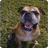 Adopt A Pet :: Juno - Thomasville, GA