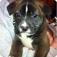Adopt A Pet :: Rebel - Orlando, FL