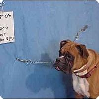 Adopt A Pet :: Bosco - FOUND! - Zanesville, OH