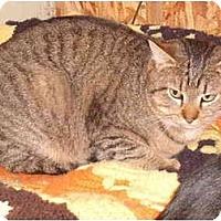 Adopt A Pet :: Tuffy - Morris, PA