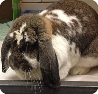 Other/Unknown Mix for adoption in Parma, Ohio - Clover