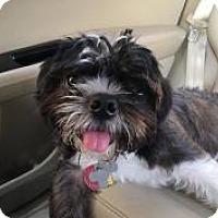 Adopt A Pet :: Treasure - Mt Gretna, PA
