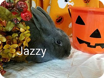 Dutch Mix for adoption in Williston, Florida - Jazzy