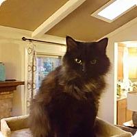 Adopt A Pet :: Ari - Simpsonville, SC
