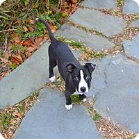 Adopt A Pet :: Kona - Reisterstown, MD