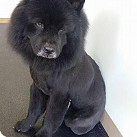 Adopt A Pet :: Teddy - Lawrenceville, GA