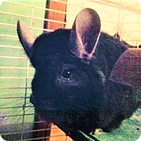 Adopt A Pet :: Diablo - Granby, CT