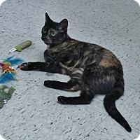 Adopt A Pet :: Annie - Chambersburg, PA