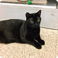 Adopt A Pet :: Maxx -Adoption Pending! - Colmar, PA