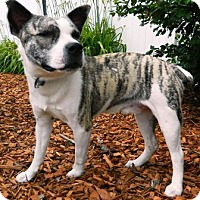 Adopt A Pet :: Jasper - Columbus, NE