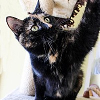 Adopt A Pet :: Princess - Leonardtown, MD