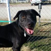Adopt A Pet :: Kobe - justin, TX