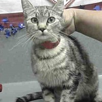 Adopt A Pet :: Snickers - San Bernardino, CA