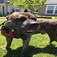 Adopt A Pet :: DRODEE - Alameda, CA