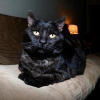 Adopt A Pet :: Ben - Toronto, ON