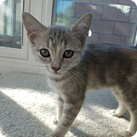 Adopt A Pet :: Cactus - Mission Viejo, CA