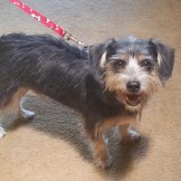 Adopt A Pet :: Nash - Scottsdale, AZ