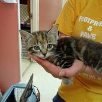 Adopt A Pet :: Trina - Myrtle Beach, SC
